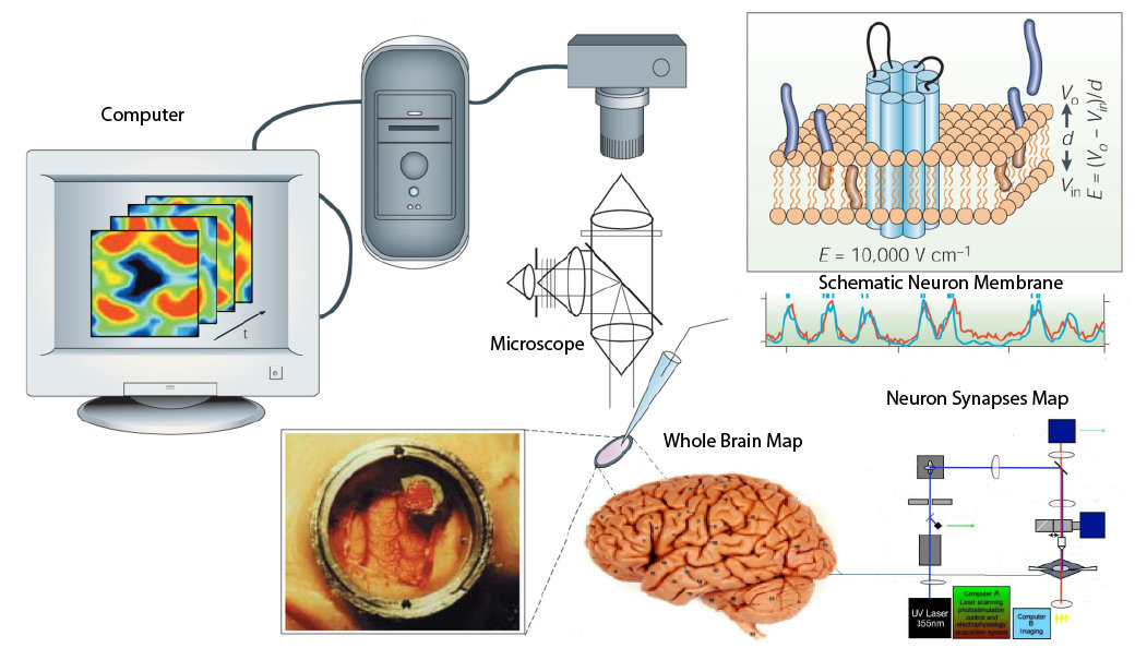 Penemuan Dr. Taruna Ikrar dalam Pemetaan Otak Manusia