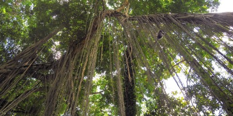 hutan-tropis