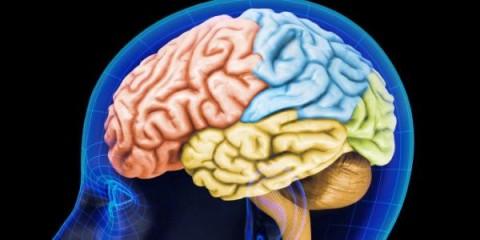 ilustrasi-otak-manusia