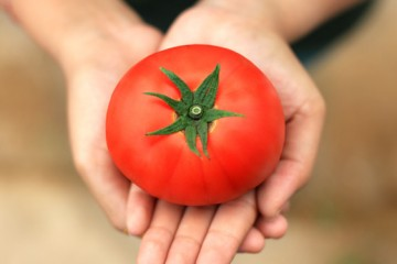 King-Tomato_about-us-page