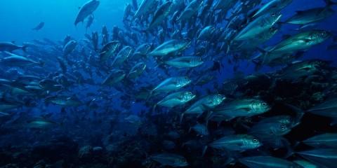 a-school-of-fish-in-a-blue-sea-wolcott-henry