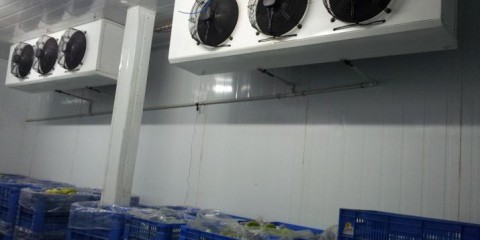 ripening-chambers-and-cold-storage-facility-4