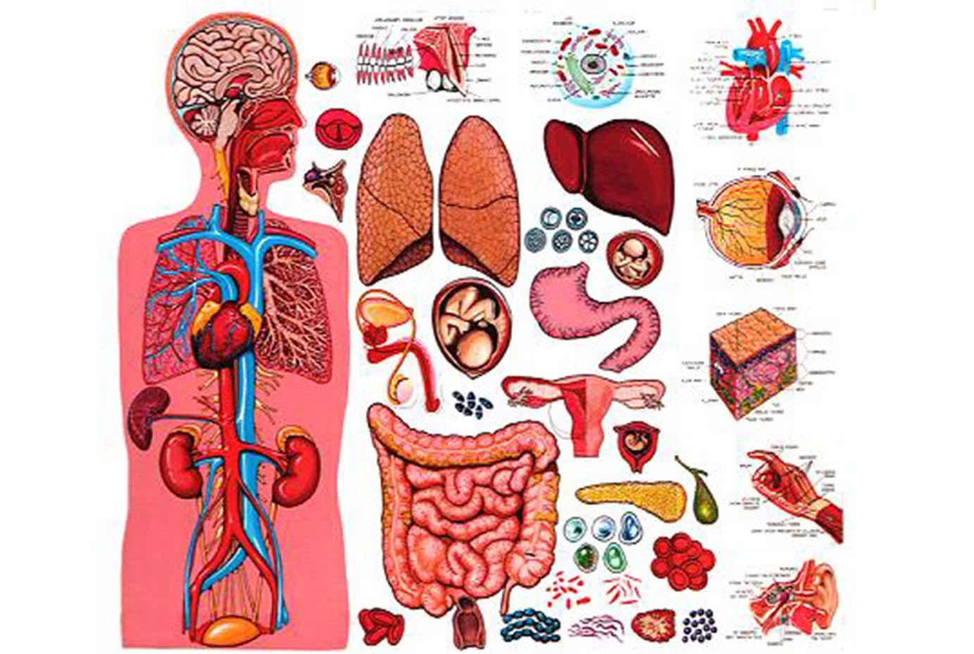Строение тела человека. Видеоурок. Окружающий мир 2 Класс 44