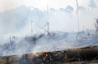 D:Arip BudimanBank PhotoTumplek Blekkebakaran-hutan