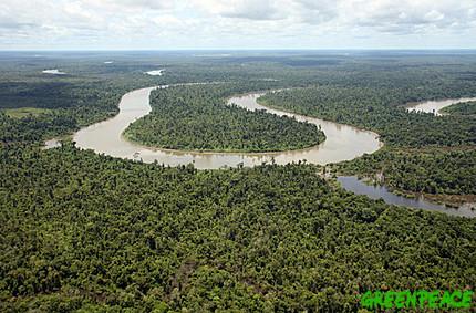 hutan tropis
