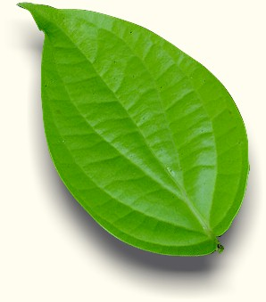 daun sirih