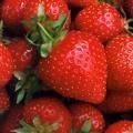 Khasiat Strawberry