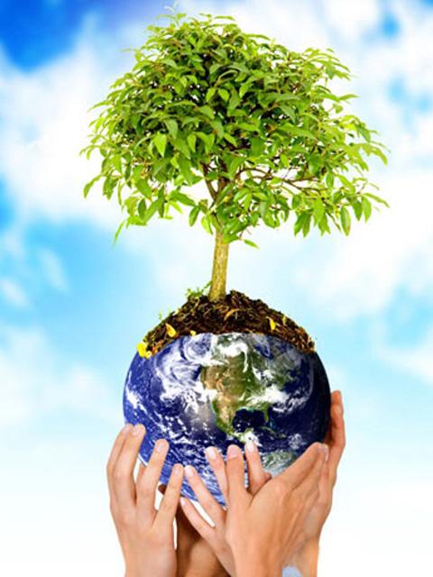 Pohon Organik