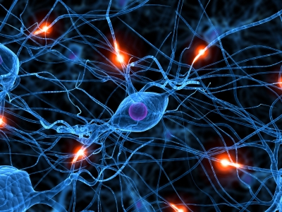 Interaksi-antara-sel-sel-saraf-diotak-yang-menentukan-kemampuan-memori