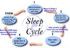 Tahapan Tidur Menurut Neurosains