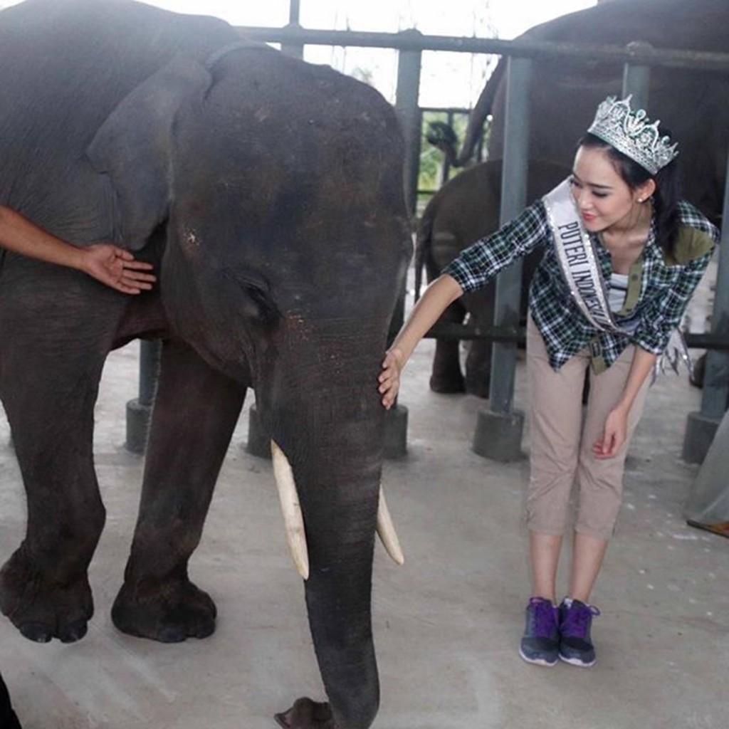 Felice Hwang dengan Gajah